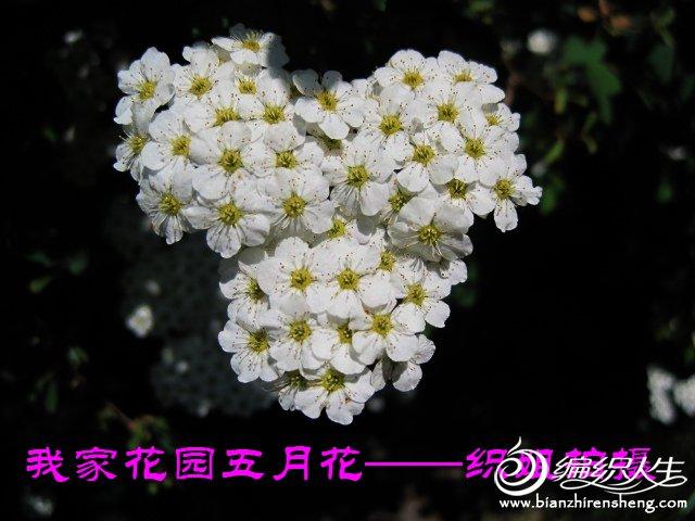 我家花园五月花卉-织姐拍摄- (19).jpg
