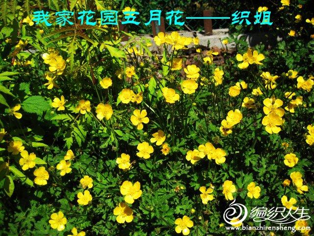 我家花园五月花卉-织姐拍摄- (22).jpg