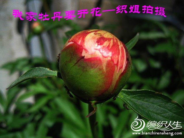 我家花园五月花卉-织姐拍摄- (23).jpg