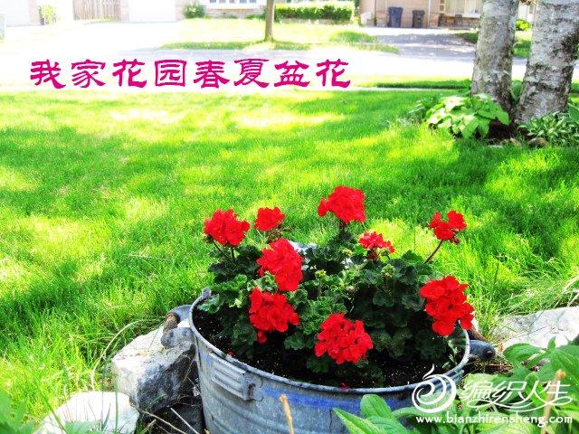 我家花园五月花卉-织姐拍摄- (26).jpg