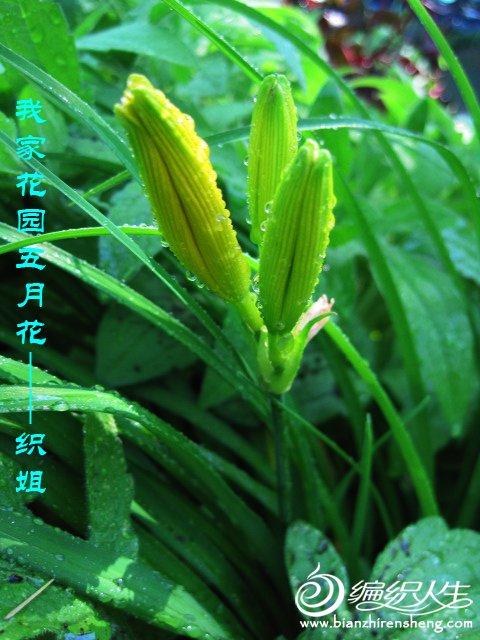 我家花园五月花卉-织姐拍摄- (32).jpg
