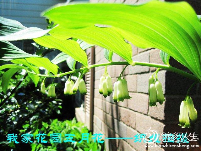我家花园五月花卉-织姐拍摄- (34).jpg