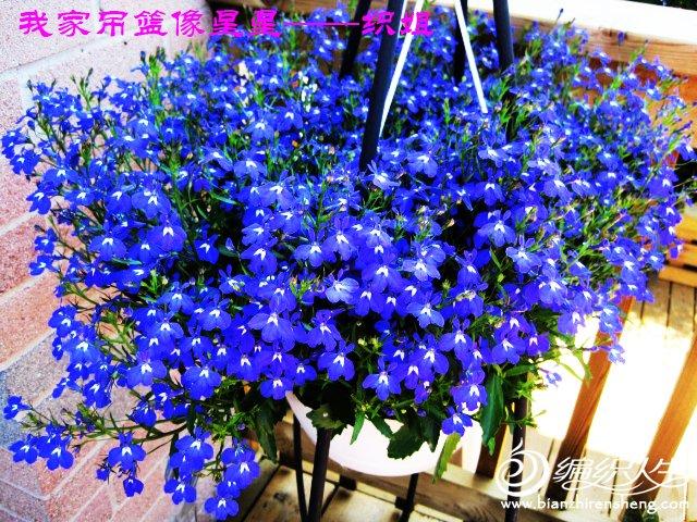 我家花园五月花卉-织姐拍摄- (38).jpg