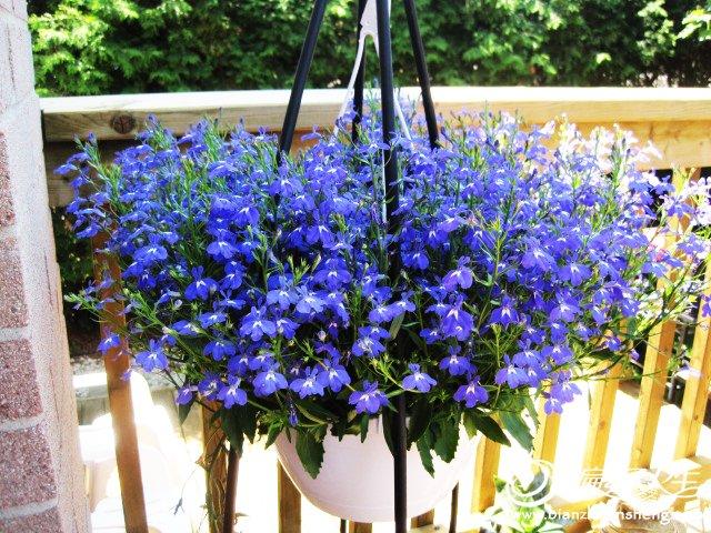 我家花园五月花卉-织姐拍摄- (39).jpg