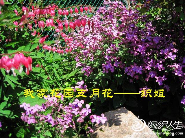 我家花园五月花卉-织姐拍摄- (48).jpg
