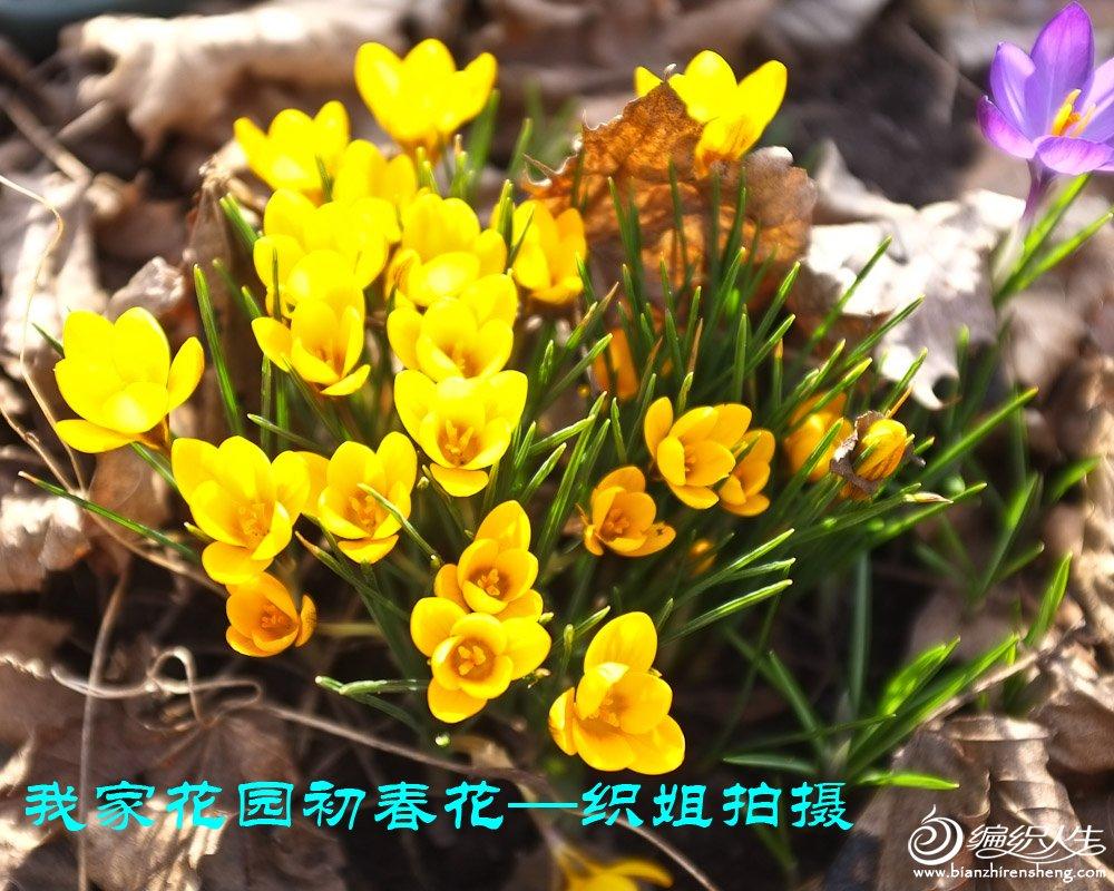 我家花园四月花卉——织姐拍摄- (9).jpg