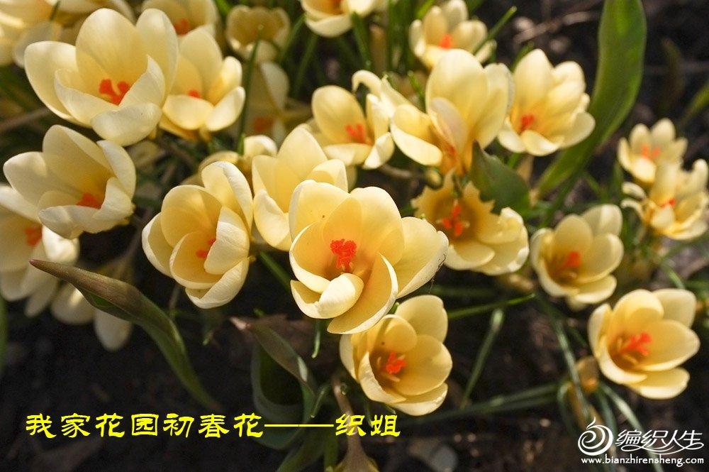 我家花园四月花卉——织姐拍摄- (10).jpg