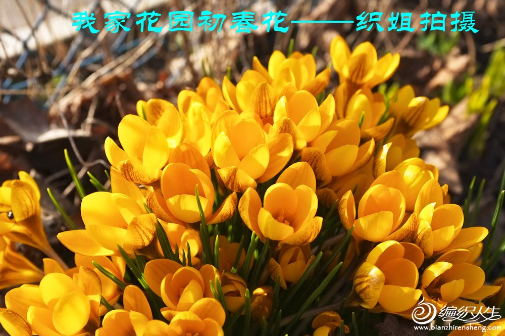 我家花园四月花卉——织姐拍摄- (11).jpg