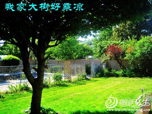 我家花园四月花卉——织姐拍摄- (13).jpg