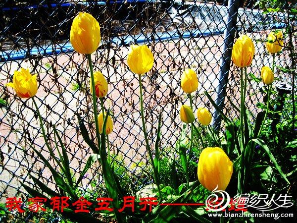 我家花园四月花卉——织姐拍摄- (14).jpg