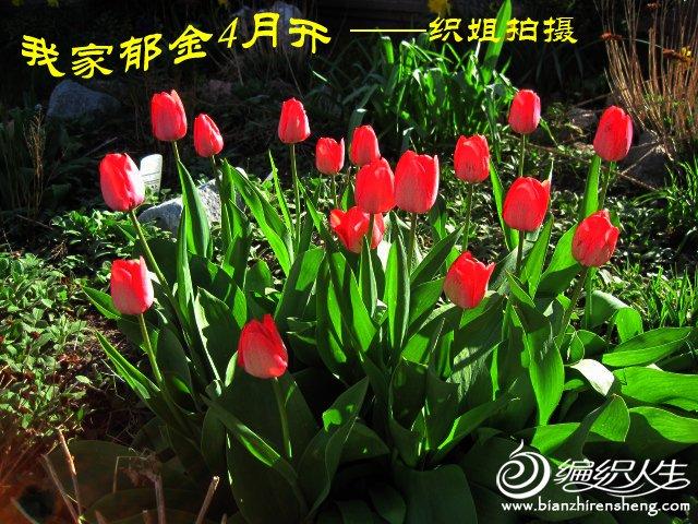 我家花园四月花卉——织姐拍摄- (17).jpg
