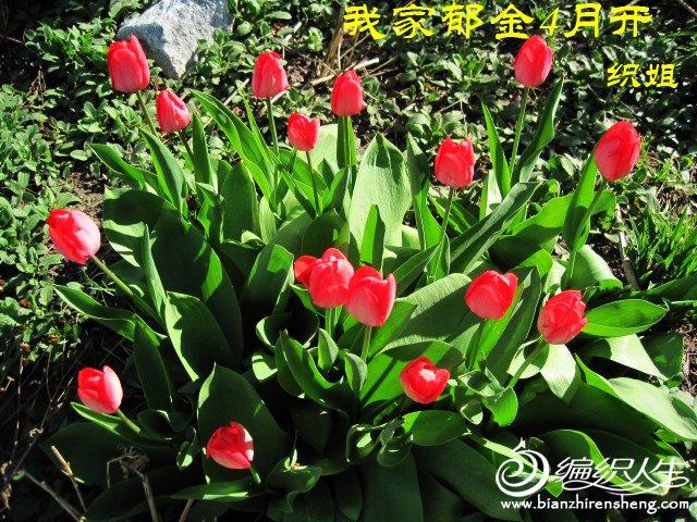 我家花园四月花卉——织姐拍摄- (18).jpg