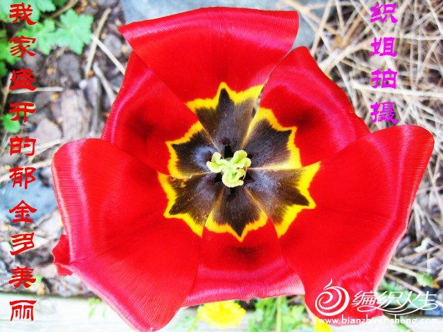 我家花园四月花卉——织姐拍摄- (19).jpg