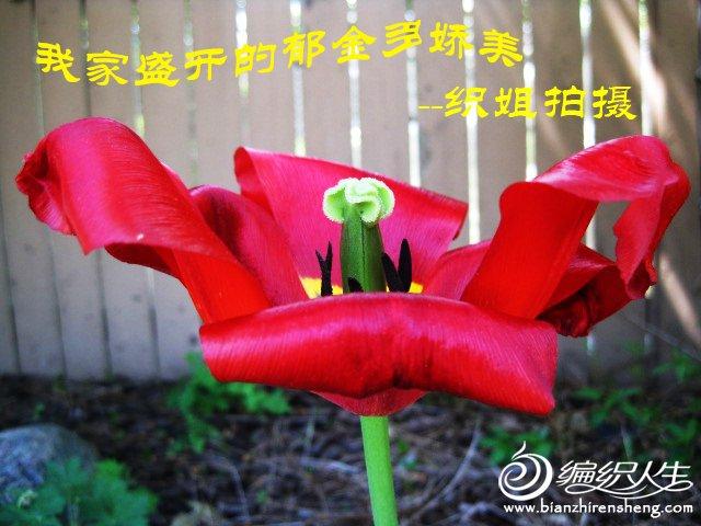 我家花园四月花卉——织姐拍摄- (20).jpg