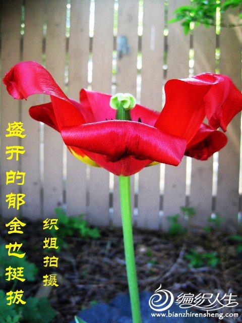 我家花园四月花卉——织姐拍摄- (21).jpg