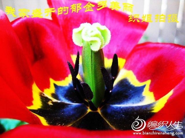 我家花园四月花卉——织姐拍摄- (23).jpg