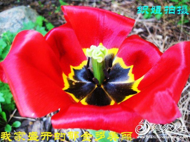 我家花园四月花卉——织姐拍摄- (24).jpg