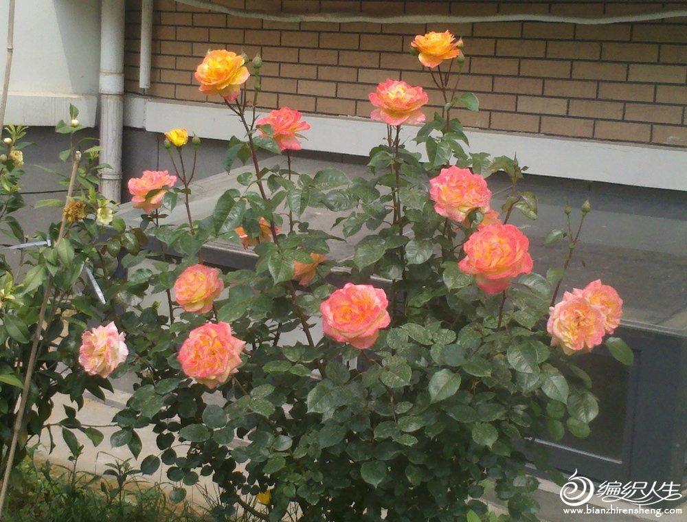 2012-05-24_10-25-28_280.jpg