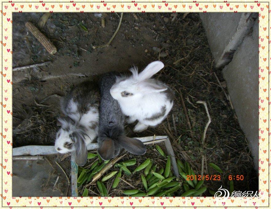 小兔子一家