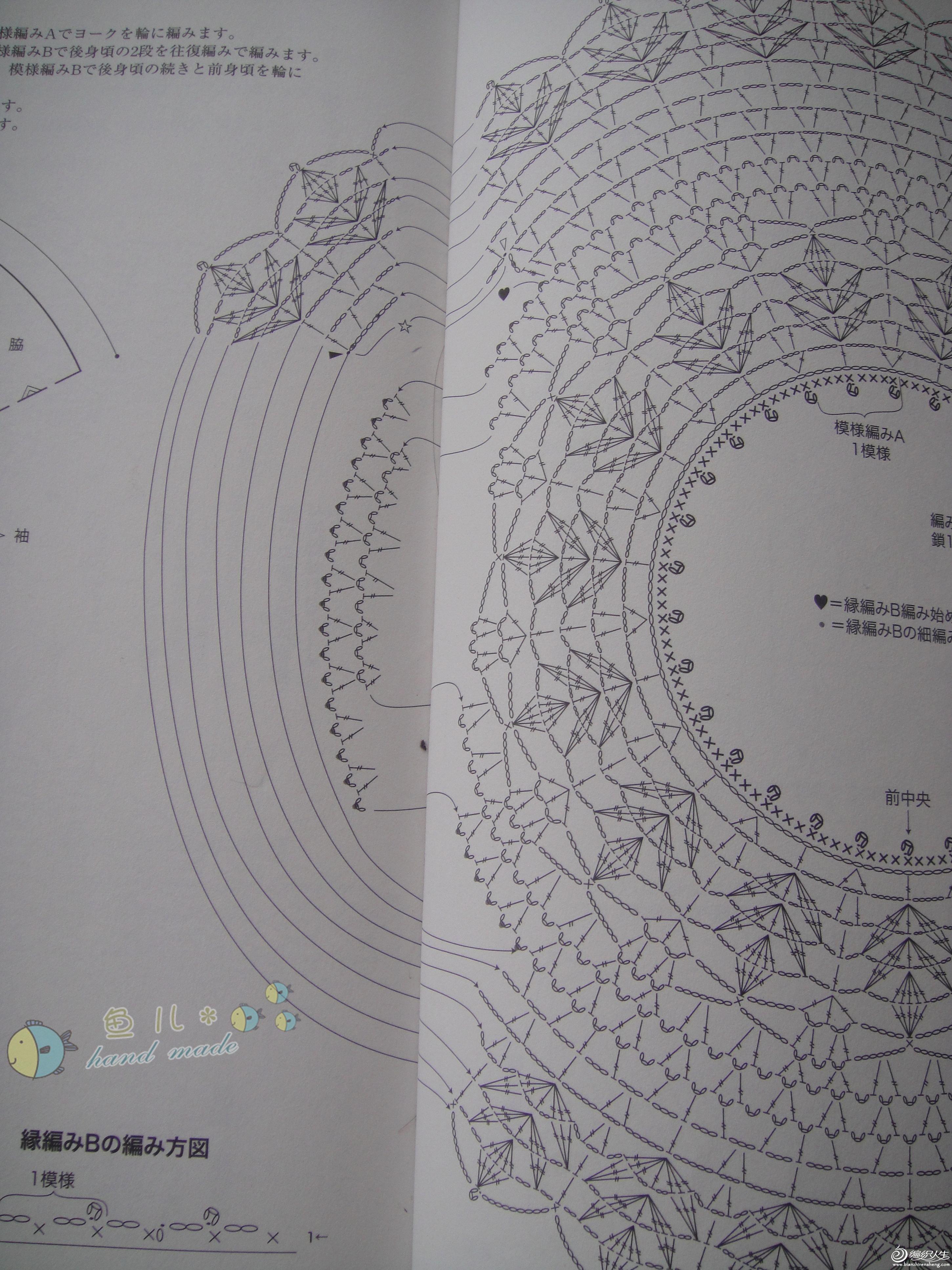 雏菊图解4-1.jpg