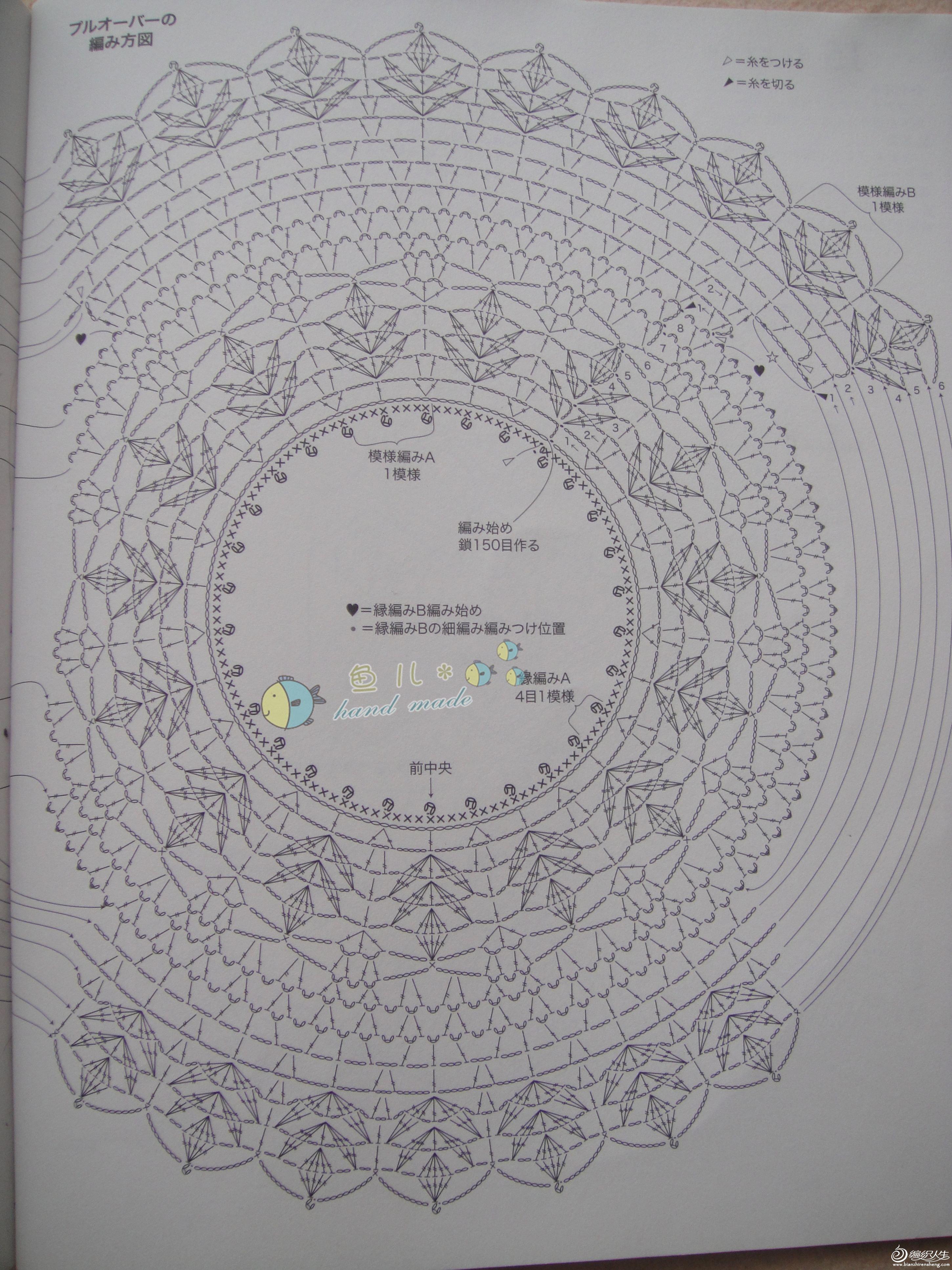 雏菊图解3-1.jpg