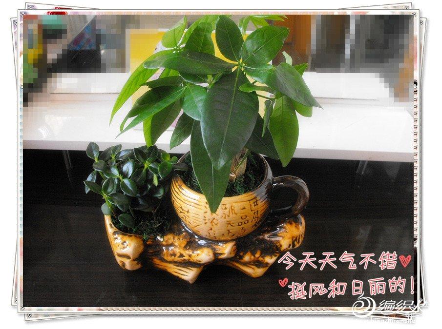 xinqing7.jpg