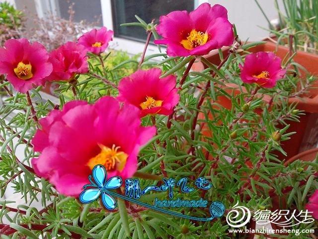 IMG_20120531_173731.jpg