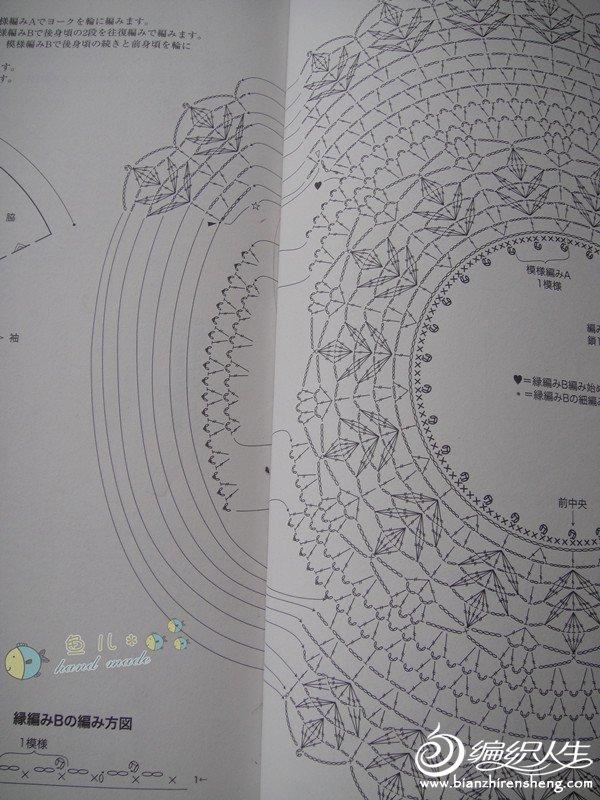 雏菊图解4.jpg