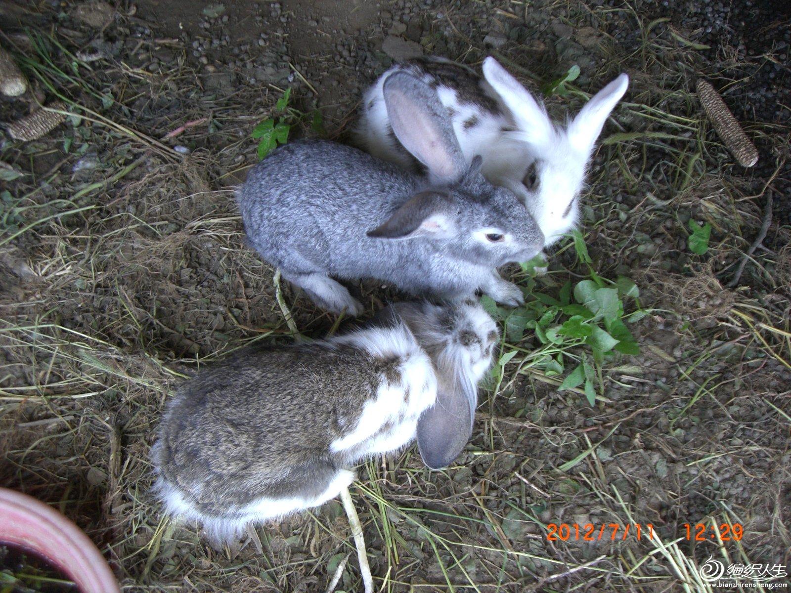 三只小兔.JPG