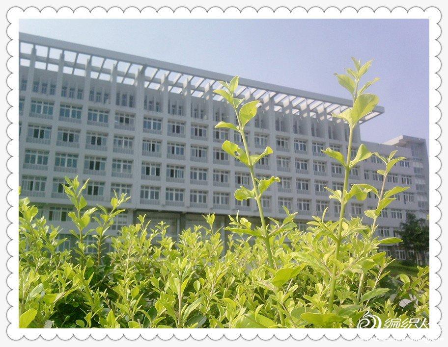 楼与绿.jpg