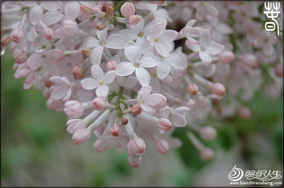春之声.jpg