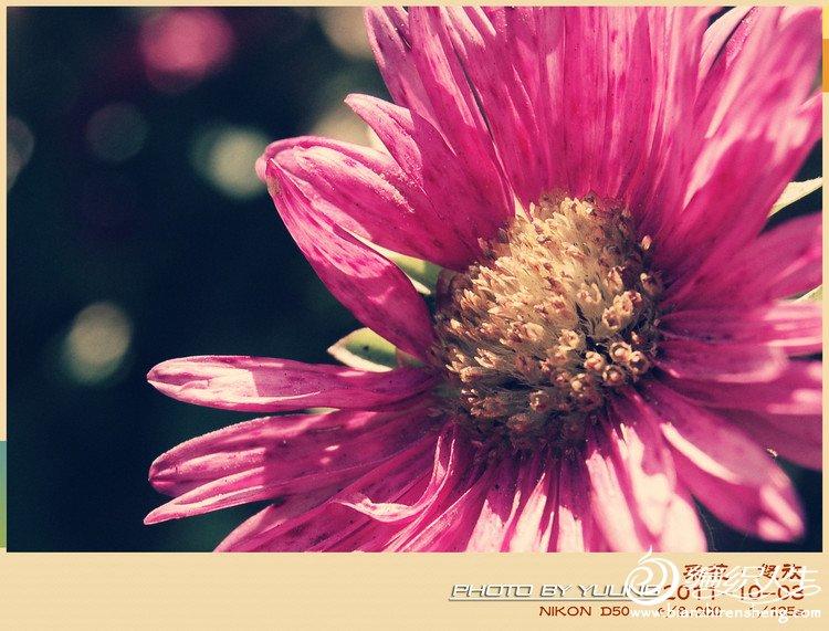 采花.jpg