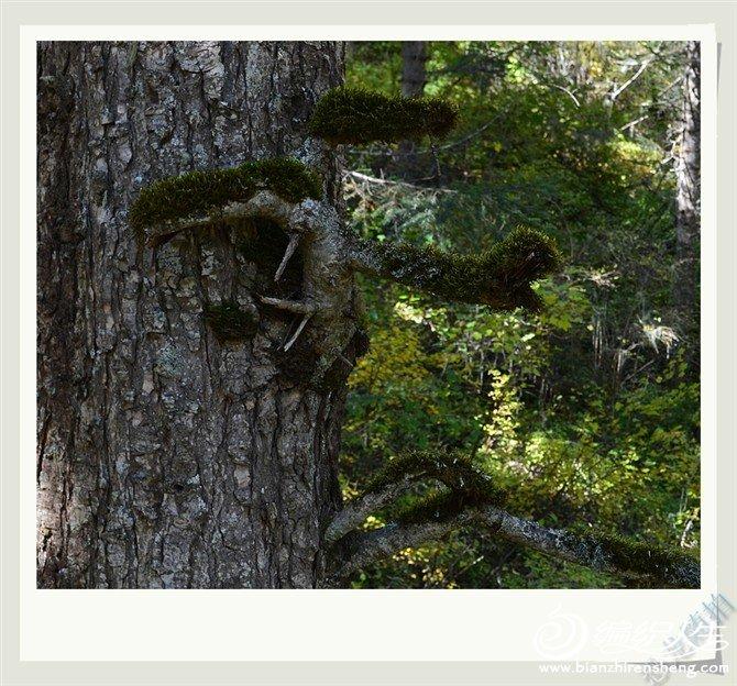 母子树.jpg