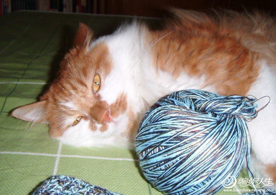 懒猫和线线