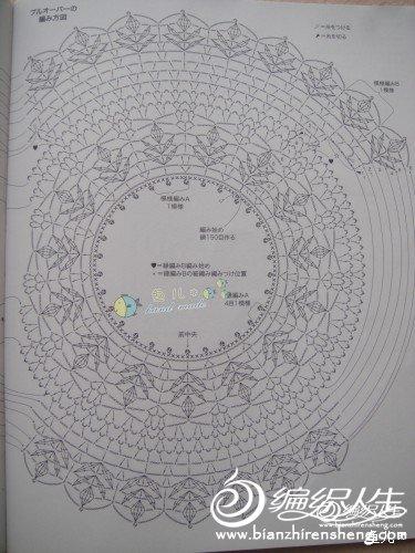 雏菊图解.jpg