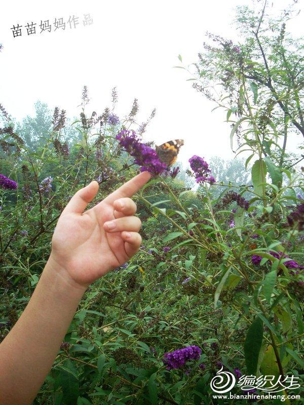拍照时有很多蝴蝶