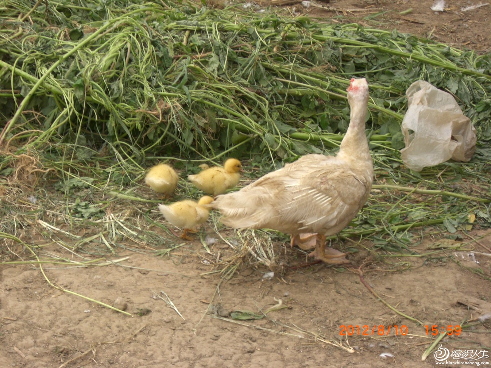 母亲带着孩子们.JPG