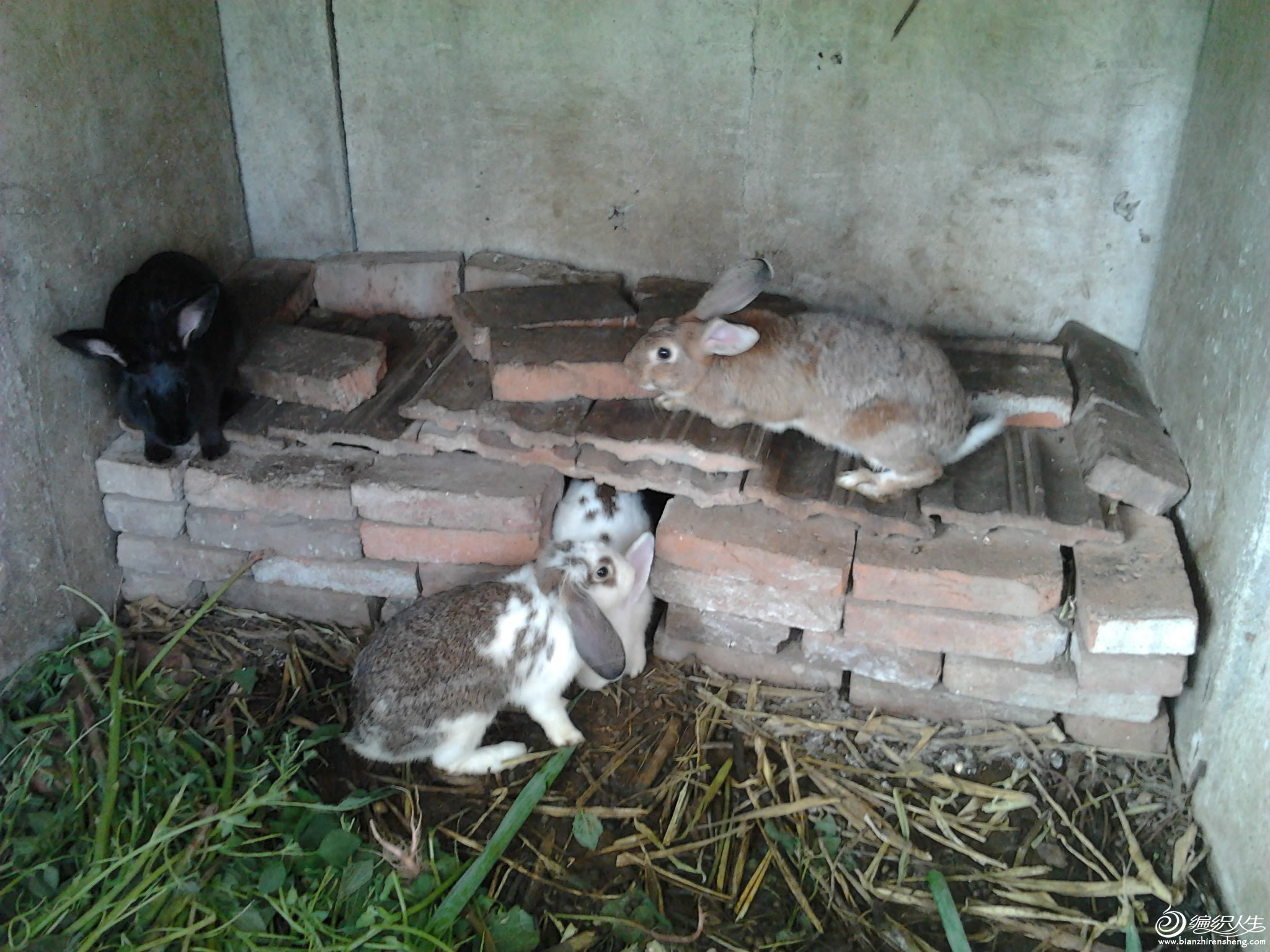 四只兔.jpg