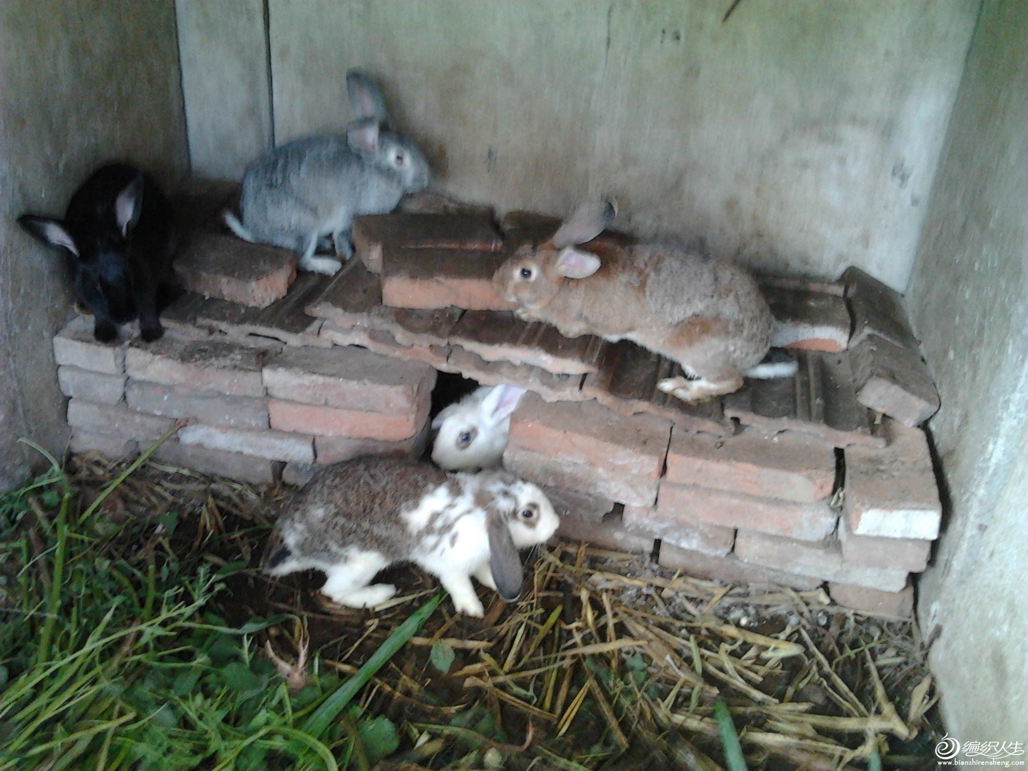 五只兔.jpg