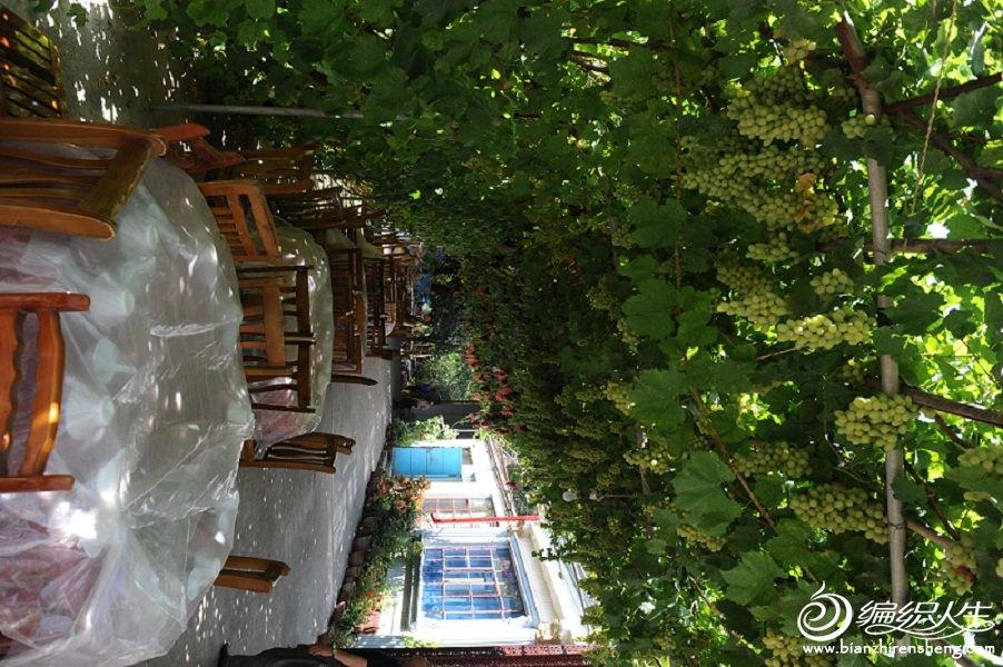 23,吃饭点假日庄院,在葡萄架下的美味。.jpg