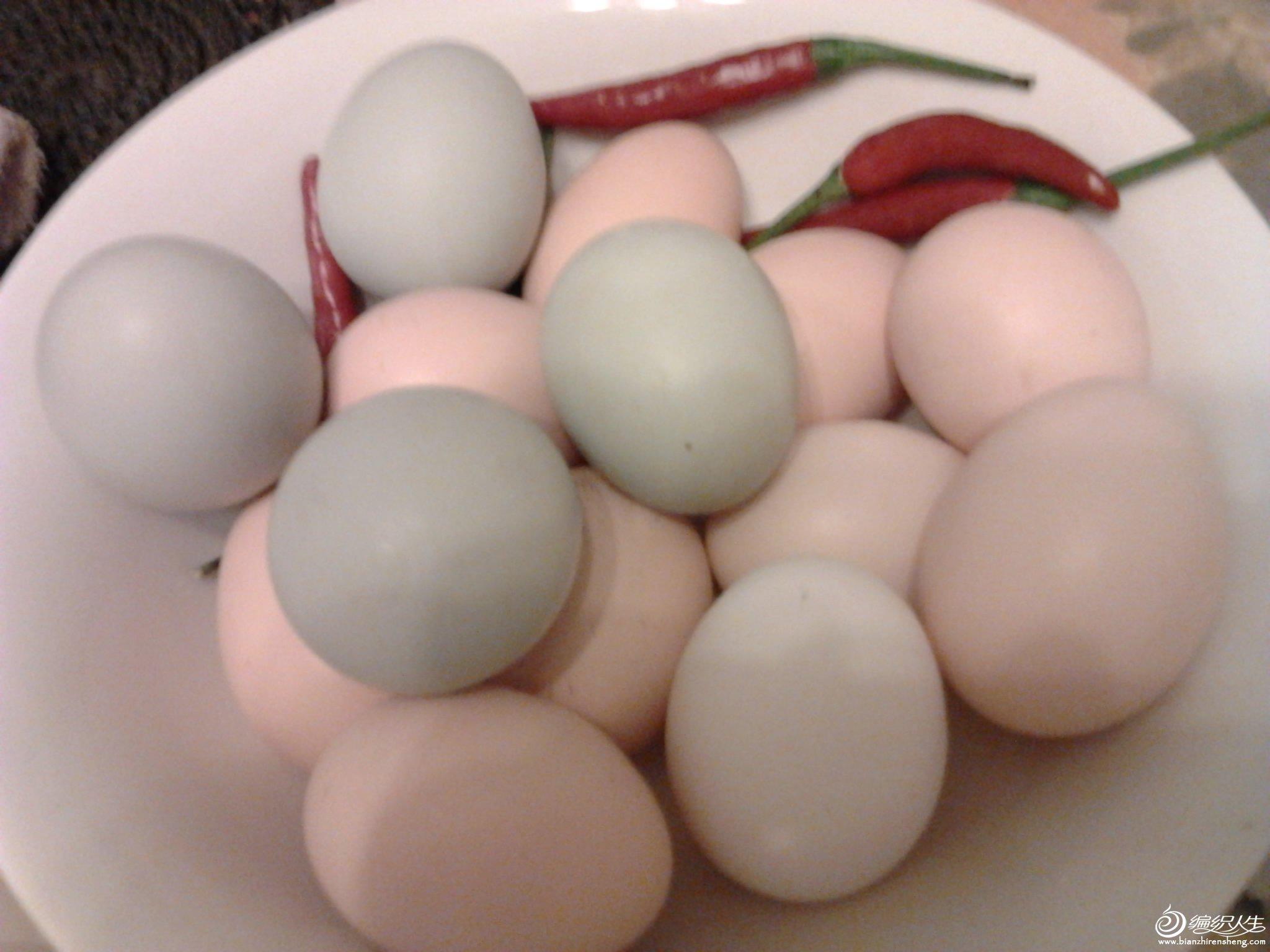 刚捡的鸡蛋.jpg