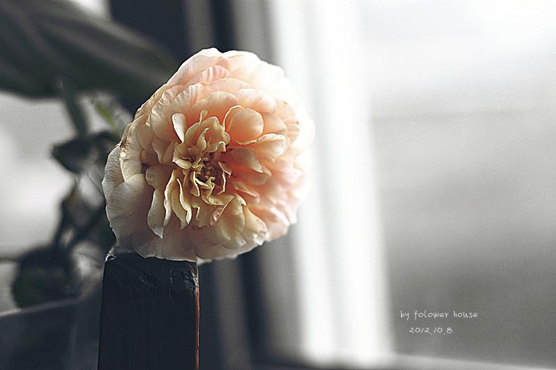 IMG_8208_副本.jpg