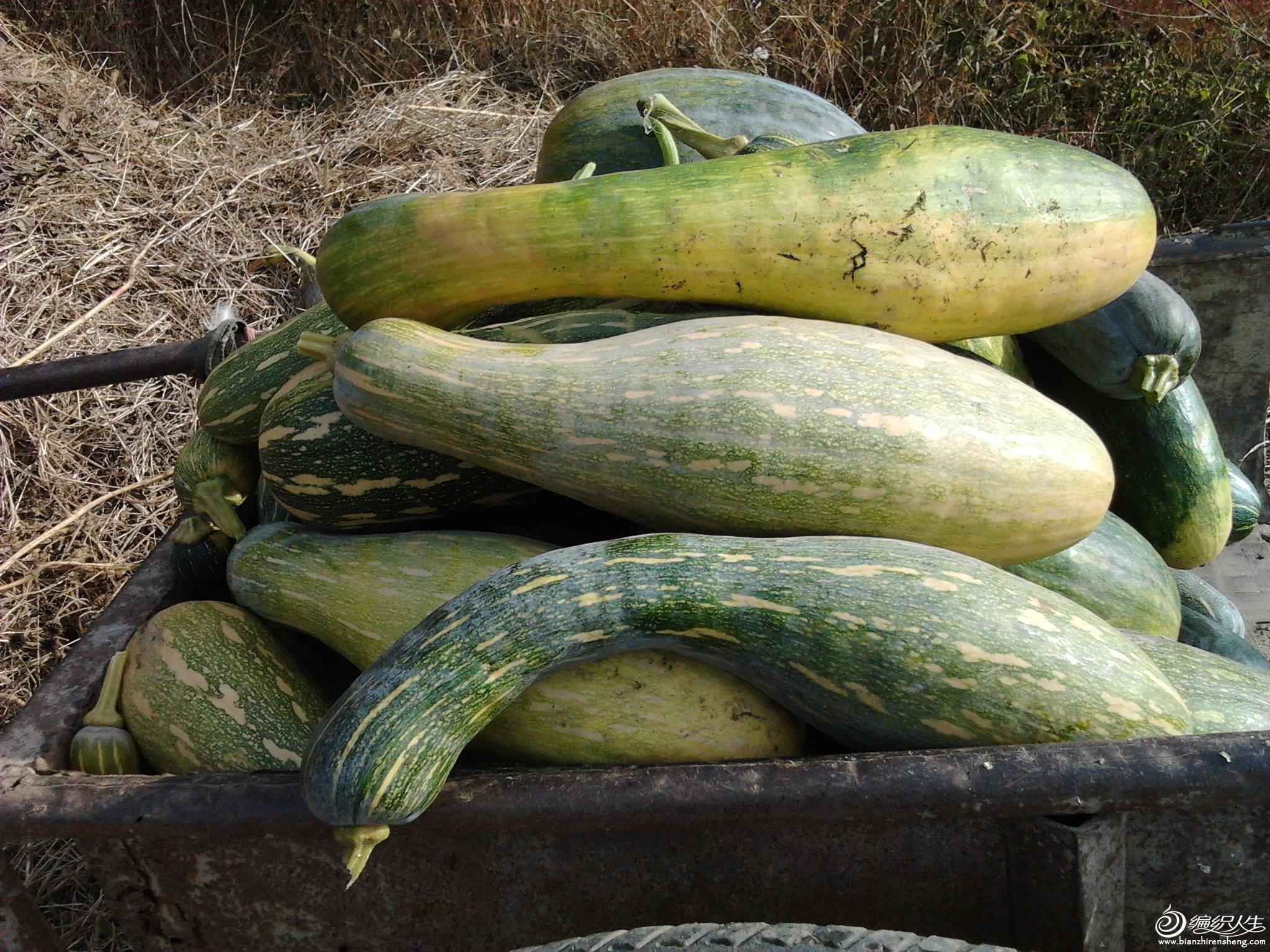 2012-10-18南瓜.jpg