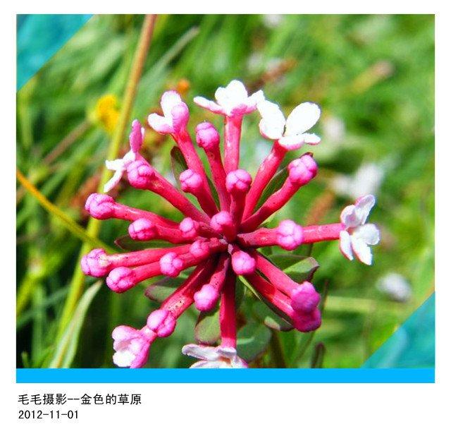 1207191612effa55d627adb72c_副本.jpg