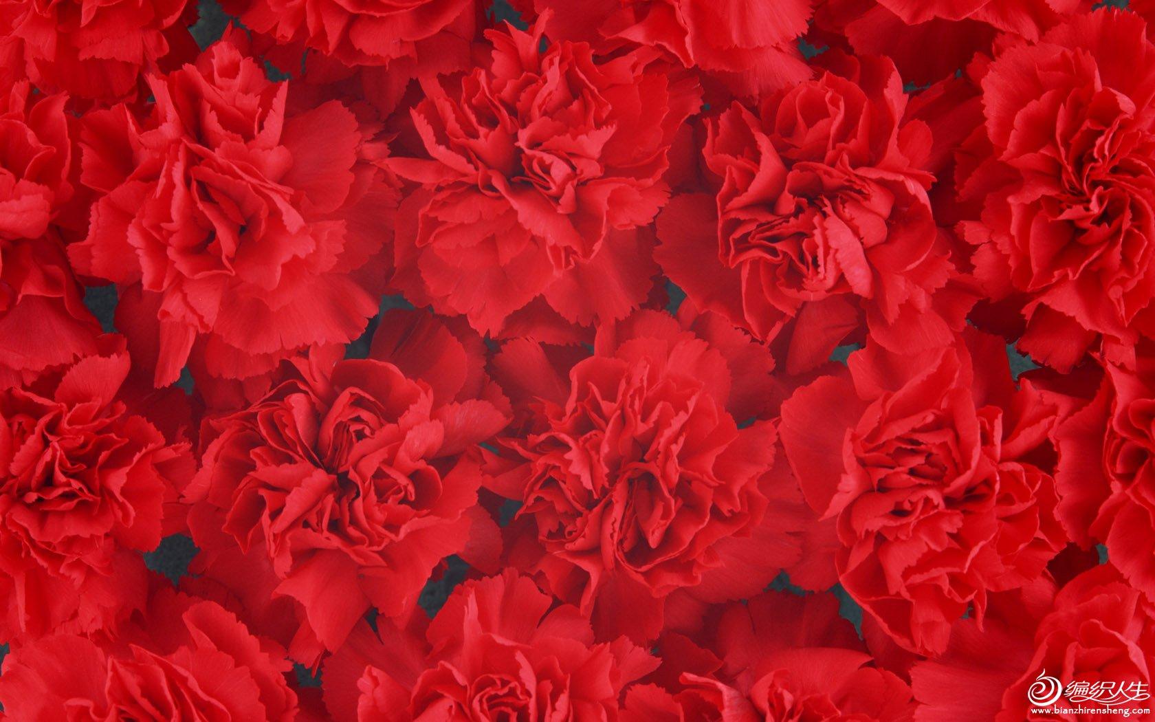 1680flower_2002.jpg