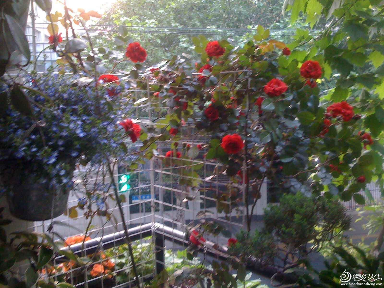 夏季花园2.jpg