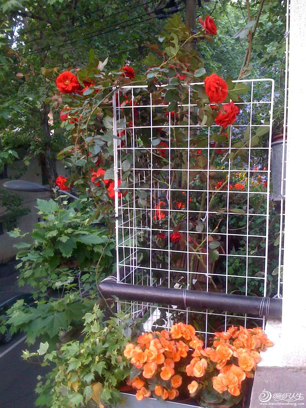 夏季花园3.jpg