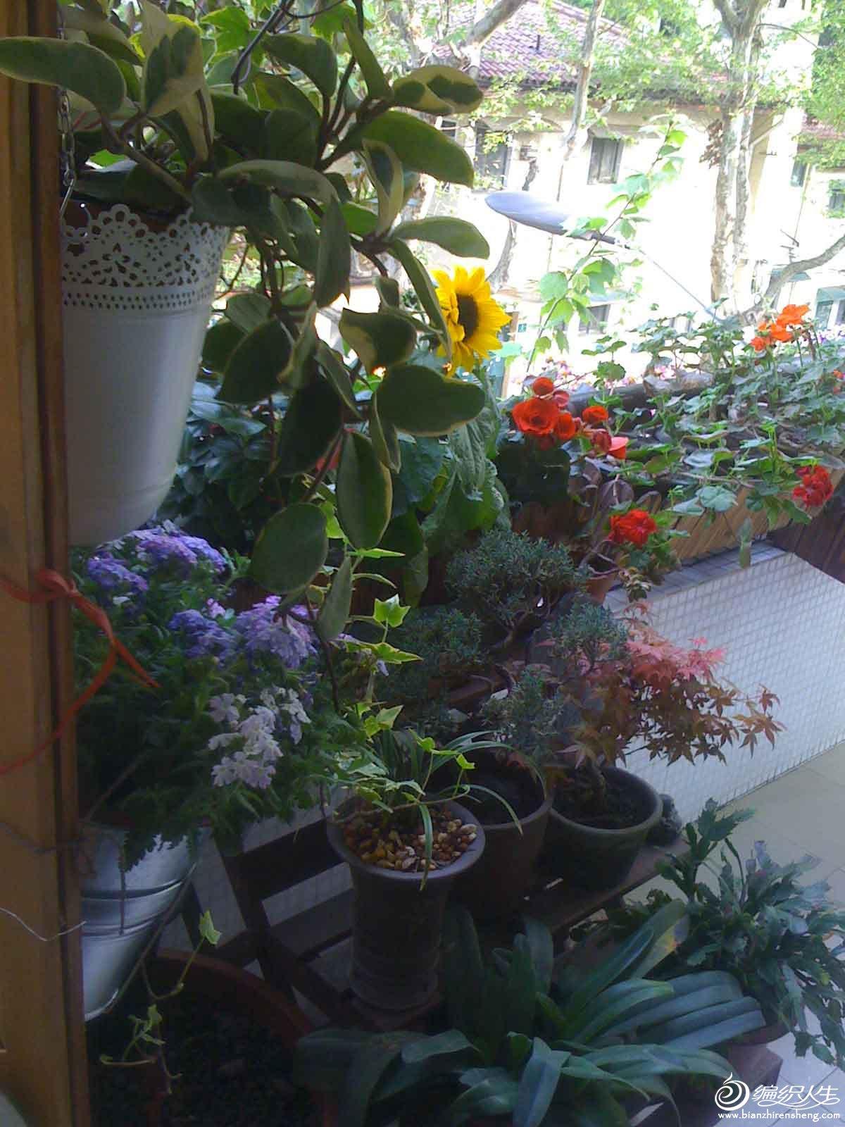 夏季花园4.jpg