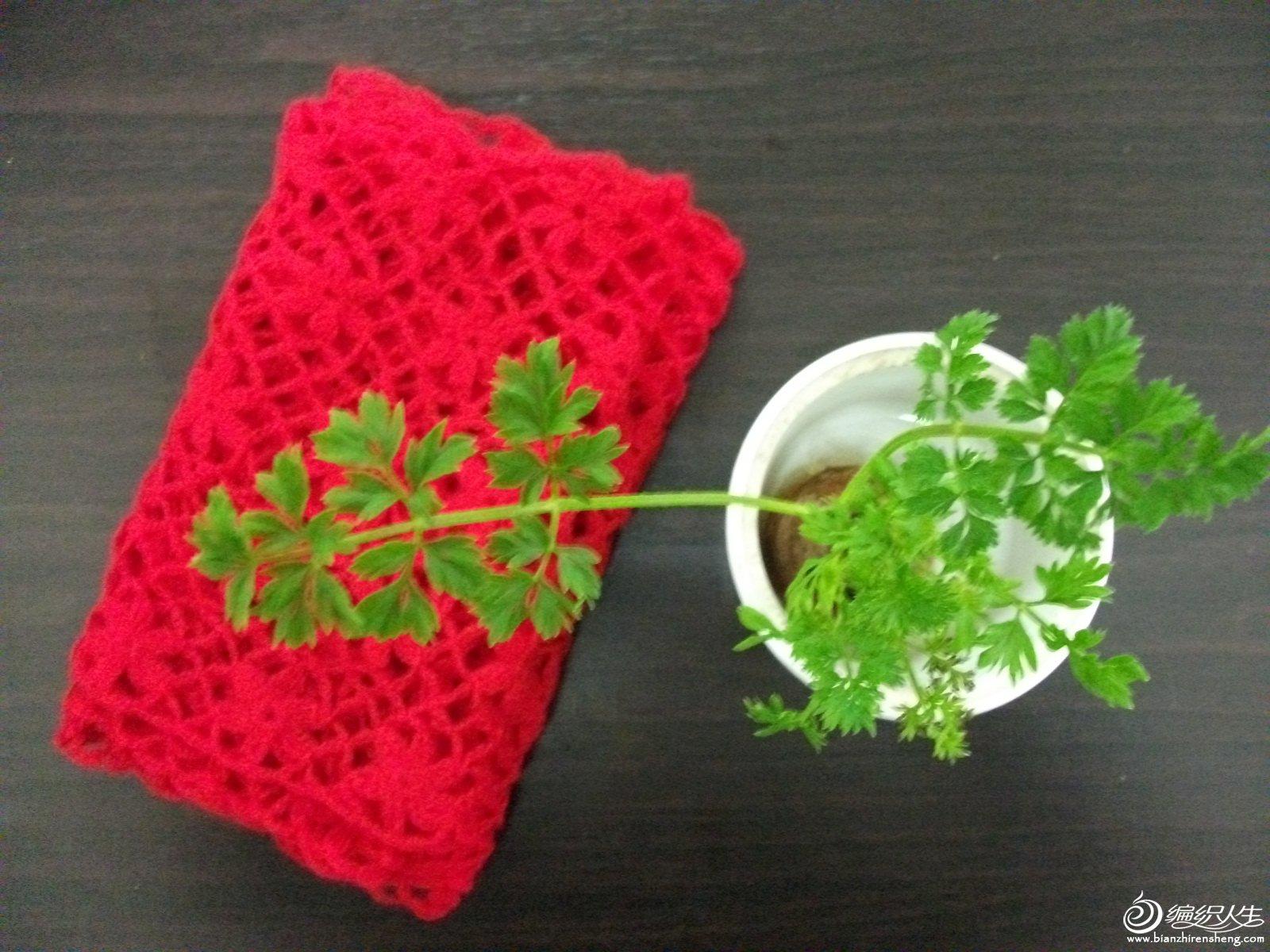 红围巾 009.jpg