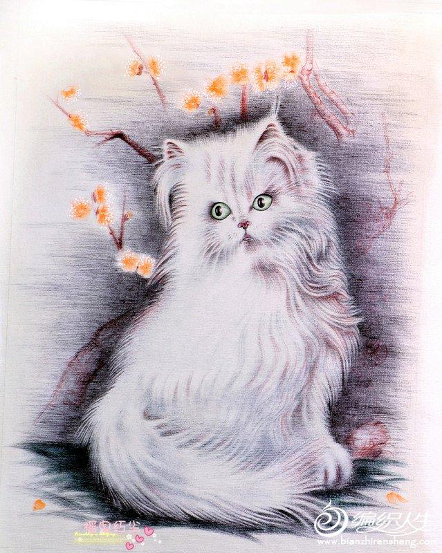 猫3_副本.jpg